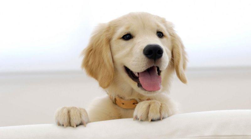 La-razón-por-la-que-un-cachorro-te-puede-alegrar-la-vida-¡lloré-de-emoción