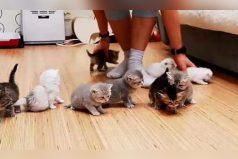 Los gatos que se hicieron famosos por esta loca foto, ¡increíble!