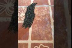 ¡Qué cosa más extraña! Una mujer grabó un misterioso objeto que se arrastra por el suelo. ¿Tu qué crees que será?