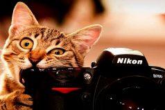 10 gatos que enloquecieron al mundo entero con sus locuras