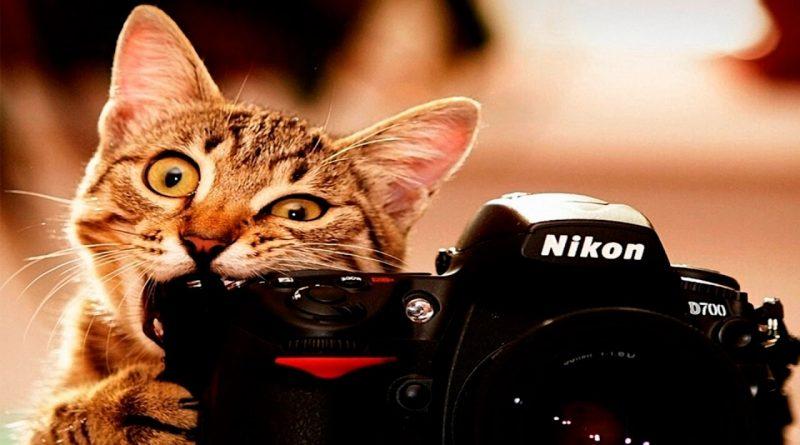 10-gatos-que-enloquecieron-al-mundo-entero-con-sus-locuras