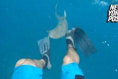 ¡Qué susto! Este buzo grabó cuando lo atacó un tiburón… ¡Y sobrevivió para mostrarlo!