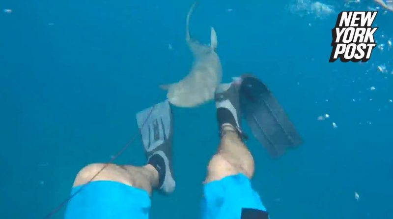 Horrifying-shark-attack-takes-a-chunk-out-of-a-mans-leg-New-York-Post