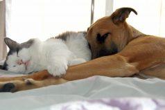 Lo que ocurre cuando perros y gatos luchan contra el sueño