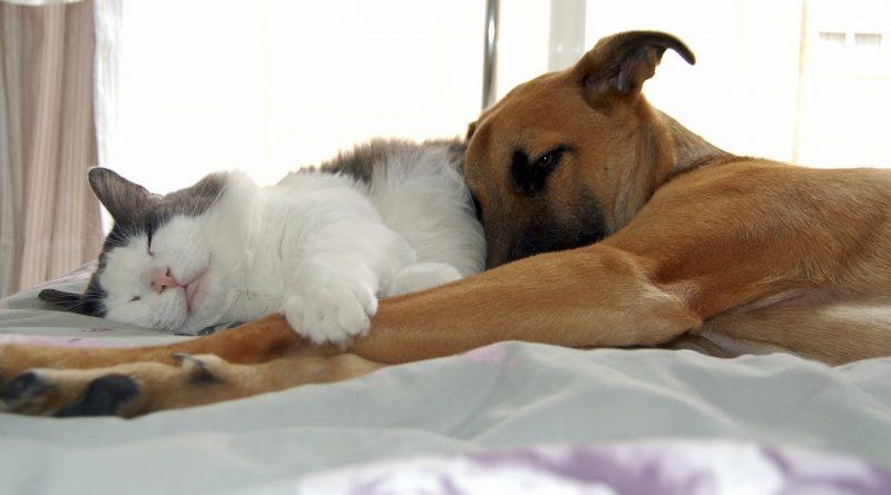 Lo-que-ocurre-cuando-perros-y-gatos-luchan-contra-el-sueño