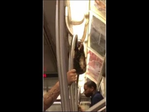 Snake-hangs-from-pole-for-ride-on-New-York-subway