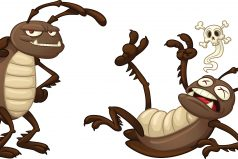 Notihumor: Las cucarachas