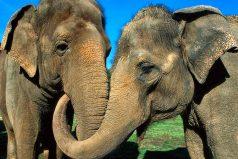 La noticia de estos animalitos, ¡tiene conmovido a la opinión publica!