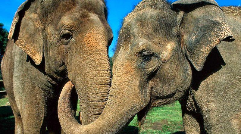 Noticia elefantes