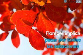 Florecer implica pasar por todas las estaciones