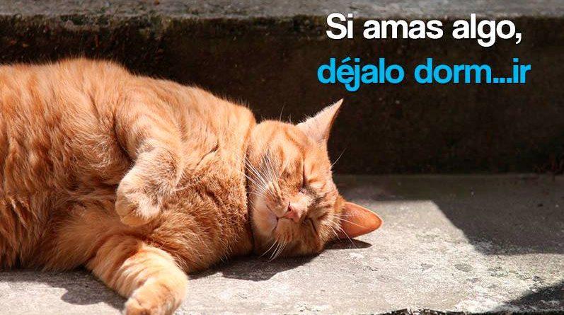 Gato amarillo durmiendo