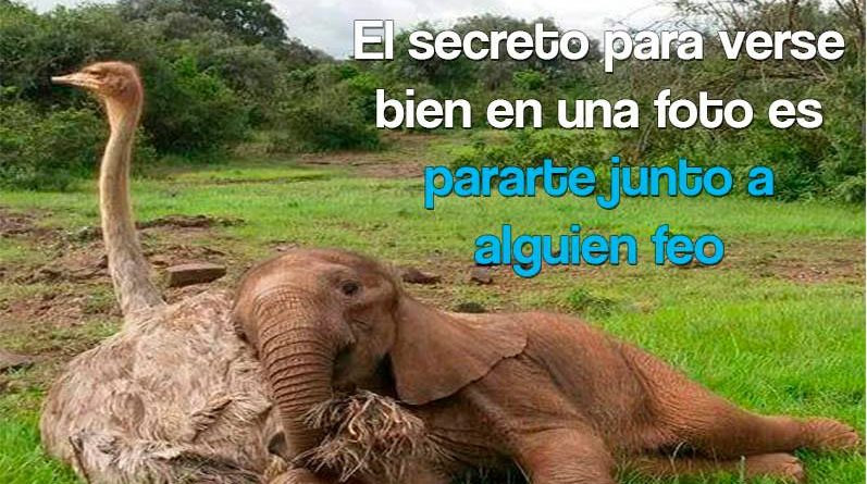 Elefante bebé junto a un avestruz