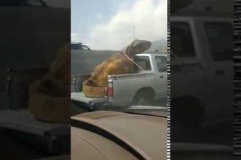 ¡Jajaja! El video que causa revuelo en las redes por la denuncia contra el maltrato… ¡A un dinosaurio!