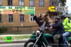 Típico en las calles de Rusia: vas por la calle cuando ves pasar… ¡Un oso en una motocicleta!