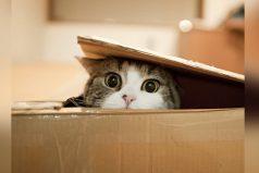 El gato más curioso y loco del mundo, ¡ya esta en el libro de los Guinness