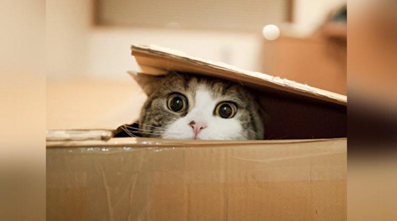 El-gato-más-curioso-y-loco-del-mundo-¡ya-esta-en-el-libro-de-los-Guinness