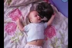 ¡Qué lindo! Este gatito logra calmar el llanto de una bebé. ¡Todos quisiéramos una niñera así de efectiva!