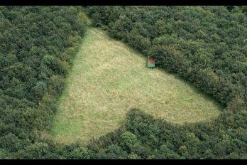 Hace 22 años sembró este bosque para recordar a su esposa… ¡Ahora así se ve desde el cielo!