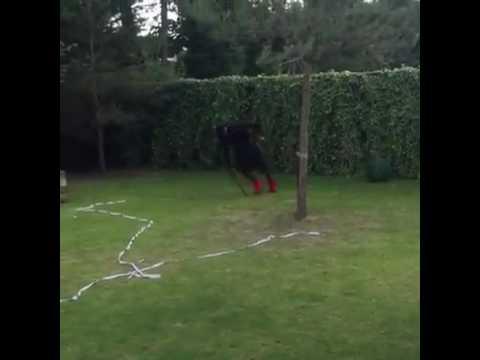 Mario-Balotelli-dizzy-challenge