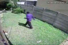 ¡El guardían que todos queremos en casa! Este ladrón salió huyendo despavorido cuando lo atacó, ¡un pequeño schnauzer!