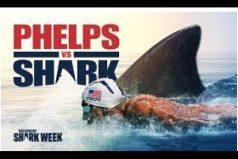¡Espectacular! La carrera entre Michael Phelps y un tiburón blanco. ¿Quién ganaría?