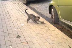 Te presentamos a la increíble Rata Ninja vs. El Gato Incrédulo. ¡La épica pelea que te dejará con la boca abierta!