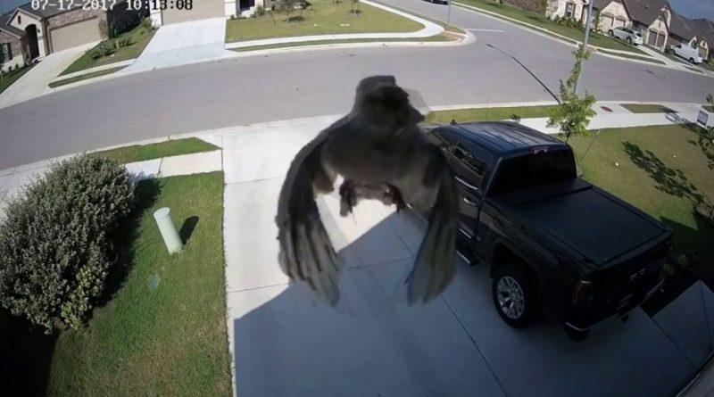el-misterioso-pájaro-que-vuela-sin-mover-las-alas