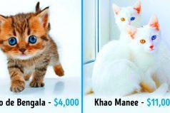Estos son los gatos más caros del mundo. ¡Valen una fortuna pero son bellísimos!
