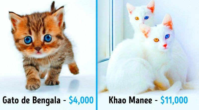 19-Gatos-Fabulosos-Que-Cuestan-Una-Fortuna