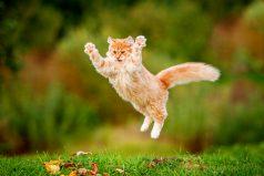 No podrás dejar de ver a estos hermosos gatitos. ¡Ellos sí que saben cómo captar tu atención!