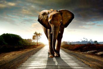 """Un elefante """"asalta"""" un camión cargado de papas para disfrutar de un gran bocado. ¡Y quién le dice que no!"""