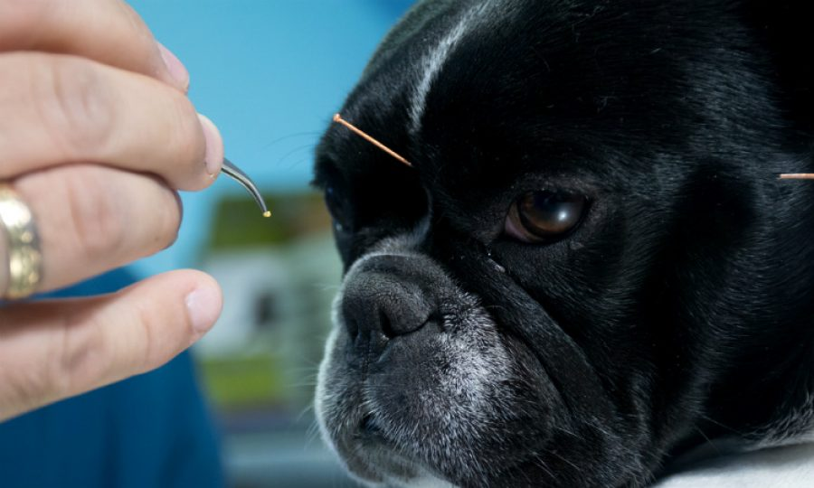 Acupuntura animal, pinchazos que dan cariño