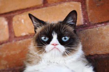 Grumpy cat: Cuando la 'mala cara' te hace ganar millones de dólares
