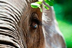 """Zoológico de Barranquilla hace """"vaca"""" para llevar a elefante al dentista"""
