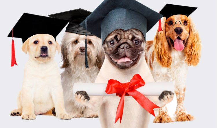 Ahora las mascotas van a la universidad. ¡Hermosa iniciativa!