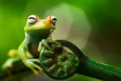 Científicos descubren nuevas especies en la Amazonia colombiana en una expedición de 20 días por seis departamentos