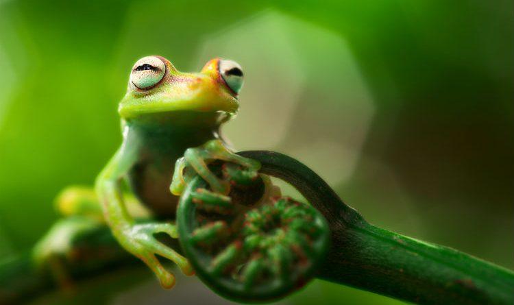 Científicos descubren 47 nuevas especies en la Amazonia