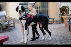 ¡Una historia increíble! La perrita le ayudó a caminar de nuevo a esta niña