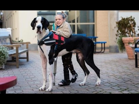 Una-historia-increíble-La-perrita-le-ayudó-a-caminar-de-nuevo-a-esta-niña