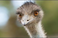 El Emu que nos muestra como nos vemos cuando un recibo se vence