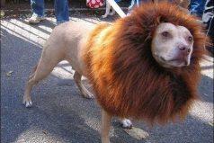 El perro más valiente del mundo, ¡mira su gran hazaña!