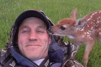 El ciervo que volvió con su familia, ¡historias de vida y amor!