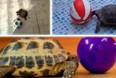 Las tortugas deportistas que están cambiando el mundo, ¡no lo podrás creer!