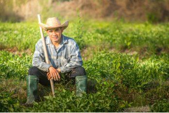 Insumo para cerveza ahora es comprado a los campesinos colombianos, ¡benefició a 242 agricultores de Boyacá!