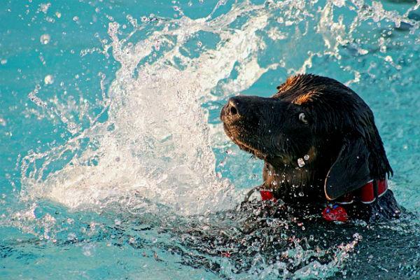 Algunas de las ventajas que tienen los perros cuando tienen contacto con el agua