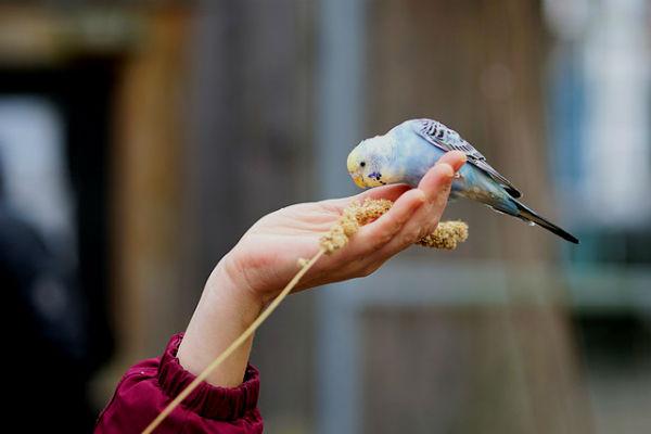 Hazte amigo de las aves y dales de comer