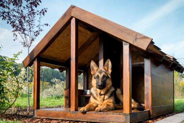 Así debe ser una casa para tu perro, ¡cómprala con este dinero! 1