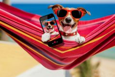 Viajar con tu mascota genera gastos que puedes pagar con este dinero