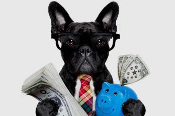 ¿Cuáles juguetes compraría tu mascota? Gana este premio y averígualo