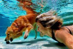 Natación para tu perro: beneficios, lugares y cómo ganar el dinero para llevarlo